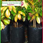 Poly-15-litre-Plant-bags-NG-2