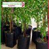4 litre Poly Planter Bags at Nursery and Garden Supplies - for more info go to nurseryandgardensupplies.com.au