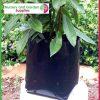 5 litre Squat Poly Planter Bags at Nursery and Garden Supplies - for more info go to nurseryandgardensupplies.com.au