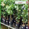 7 litre Tall Poly Planter Bags at Nursery and Garden Supplies - for more info go to nurseryandgardensupplies.com.au