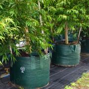 Woven Planter Bags 200 ltr