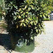 Woven Planter Bags 300 ltr 3
