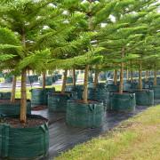 Woven Planter Bags 500 ltr 3
