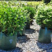 Woven Planter Bags 75 ltr 2