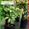 25 litre Poly Planter Bags at Nursery and Garden Supplies - for more info go to nurseryandgardensupplies.com.au
