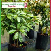 Poly-25-litre-Plant-bags-NG-2