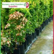 Poly-45-litre-Plant-bags-NG-2