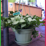 0 140mm hanging Basket 2
