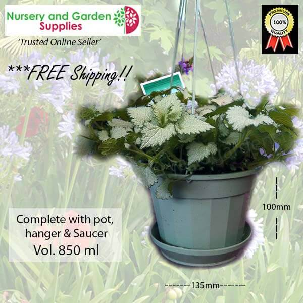 140mm Hanging pot Sage - for more info go to nurseryandgardensupplies.com.au
