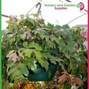 270mm-Hanging-Basket-Green-saucerless-5