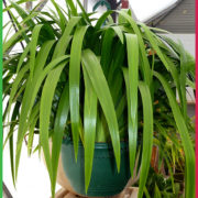 0 200mm hanging Basket green 5