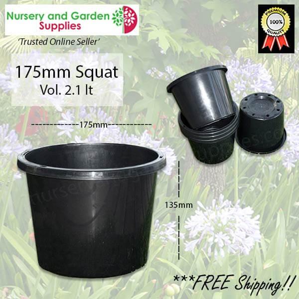 175mm Squat Plant Pot - for more info go to nurseryandgardensupplies.com.au