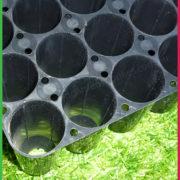 40 cell hard Tray 2