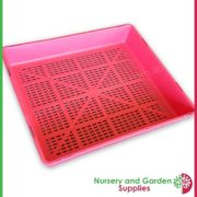 Seedling-tray-restricted-drainage-Pink-3