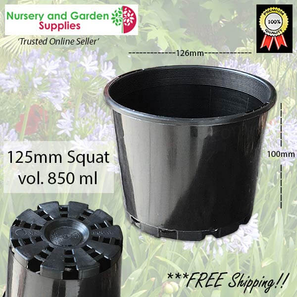 125mm Squat Plant Pot - for more info go to nurseryandgardensupplies.com.au