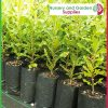 10 litre Tall Poly Planter Bags at Nursery and Garden Supplies - for more info go to nurseryandgardensupplies.com.au