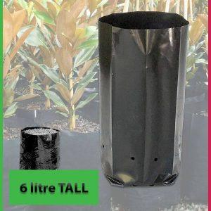 6 litre Tall Poly Planter Bags at Nursery and Garden Supplies - for more info go to nurseryandgardensupplies.com.au