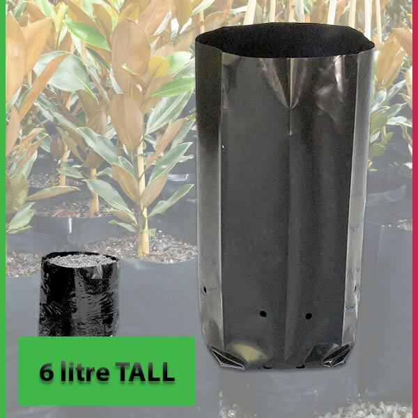 6 litre Tall Poly Planter Bags at Nursery and Garden Supplies - for more info go to nurseryandgardensupplies.com.au