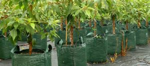 Woven Bags Category - Nursery and Garden Supplies - for more info go to nurseryandgardensupplies.com.au