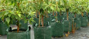 Woven Bags Category - Nursery and Garden Supplies - for more info go to nurseryandgardensupplies.com.au