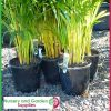 "200mm Plastic Plant Pot 8"" Standard Height Black - for more info go to nurseryandgardensupplies.com.au"