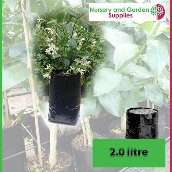 2 litre Poly Planter Bags at Nursery and Garden Supplies - for more info go to nurseryandgardensupplies.com.au