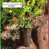 2 litre Poly Planter Bags at Nursery and Garden Supplies - for more info go to nurseryandgardensupplies.com.au