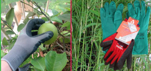 Gardening & Potting Gloves Category - Nursery and Garden Supplies - for more info go to nurseryandgardensupplies.com.au
