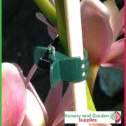 Orchid-Butterfly-Clip-3
