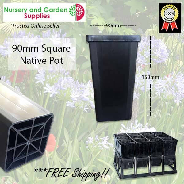 90mm Square Native Pot - for more info go to nurseryandgardensupplies.com.au