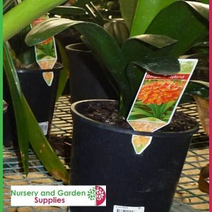 Taglok Label System - for more info go to nurseryandgardensupplies.com.au